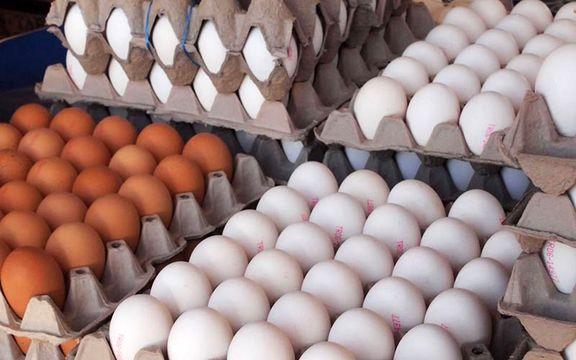 رکوردزنی قیمت تخم مرغ / هر شانه تخم مرغ به 20 تا 22 هزار تومان رسید