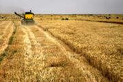 گندم از چرخه خرید تضمینی کالاهای اساسی خارج نمیشود