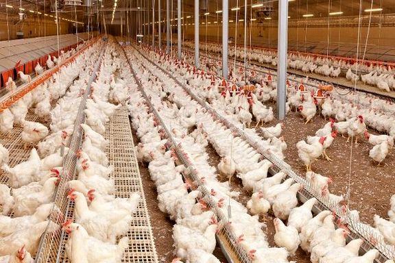 قیمت هر کیلوگرم مرغ 15 هزار تومان تعیین شد