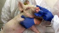 شناسایی یک نوع آنفلوآنزای خوکی در چین با پتانسیل اپیدمی