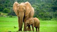 گله ای از فیل ها تلف شدند