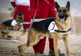 اعزام سگهای زندهیاب برای یافتن دختر گمشده در کردکوی (گلستان)