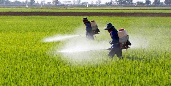 توزیع کود اوره میان کشاورزان با اولیوت تولید محصولات اساسی