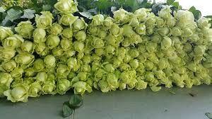 صادرات گل در گرو علمی شدن تولید آن است