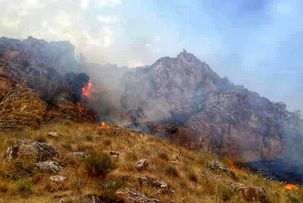 آتش سوزی جنگل های دشتستان به کجا رسید؟