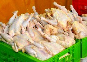 قیمت مرغ به صورت میانگین به 24 هزار و 900 تومان رسید
