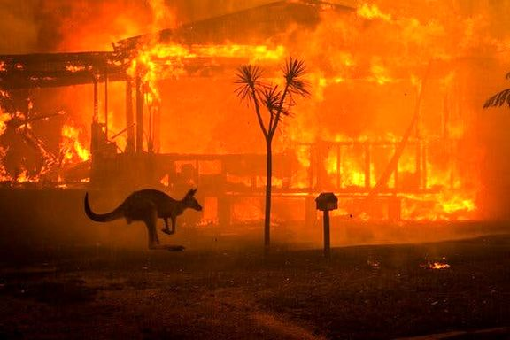 دلیل وقوع آتشسوزی  استرالیا چیست؟ آتش سوزی چه عواقبی برای جهان دارد؟