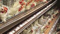 قیمت هر کیلو تخم مرغ در بازار به 12 هزار تومان رسید