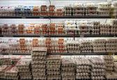 کاهش ادامهدار قیمت مرغ و تخممرغ در بازار / قیمت هر کیلوگرم تخممرغ به 8 هزار تومان رسید