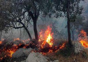 آتشسوزی در جنگلهای اندیکا همچنان ادامه دارد