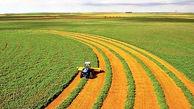 رشد پرشتاب محصولات کشاورزی در بازار جهانی